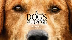 """By: Kalyssa Washburn Staff Writer    The inspirational film, """"A Dog's Purpose"""" was released to the public on January 27th, following the story of a dog named Bailey […]"""